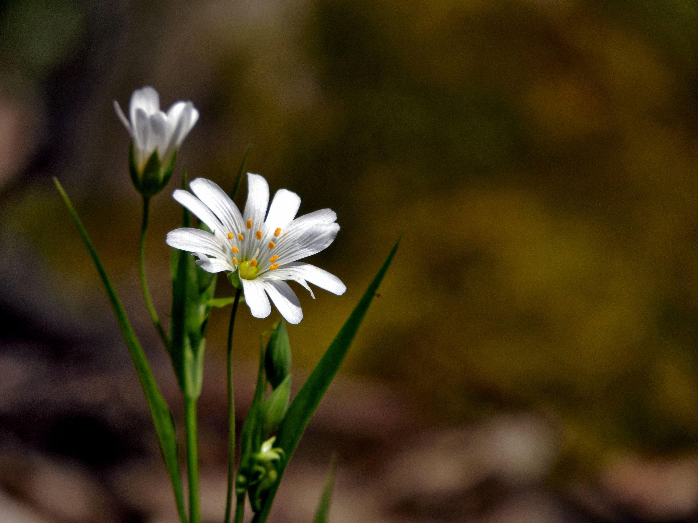 квіти лісові