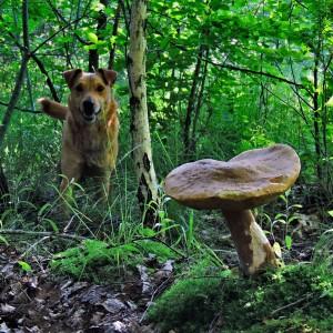 Тузік і гриб