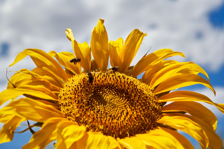 Trio de abejas